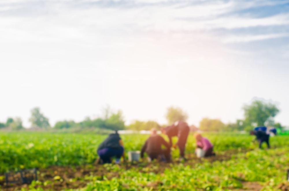 Decifrando o marketing para o agronegócio brasileiro