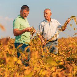 Marketing para agricultura familiar em 3 pontos essenciais